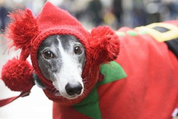 O Natal e o Reveillon são épocas difíceis para os cães, por causa dos fogos e da falta de atenção de seus donos | Foto: PA